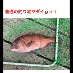 海上釣り堀デンパチヤで美味い魚を釣る[後編]