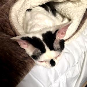 ストーカー猫 …うーん、ちょっとキミ、重ッ!