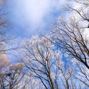 【軽井沢便り】ダイヤモンドダスト・霧氷・虹・朝日がとても美しい朝を迎えました