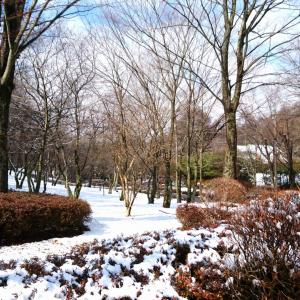 【軽井沢便り】昨夜の軽井沢は雪…湿気を含んだ重たい雪が少し積もり久しぶりの雪景色になりました!
