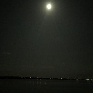 【エギング】月夜の美味しい時間帯だけアオリイカ狙いで拾い釣り