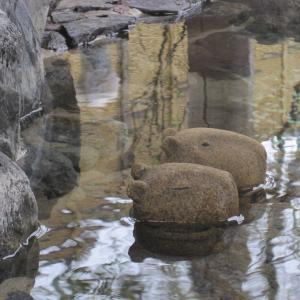 温泉に浸かっている石製カピバラ兄弟。東京の大学構内にも石んこ地蔵さんが!
