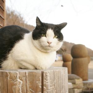 2月22日にアップするべきでした看板猫モモコの写真。そして今朝の雪景色。
