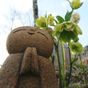 クリスマスローズがいろいろ、八重や黒いのも。ジゴクノカマノフタという花も。