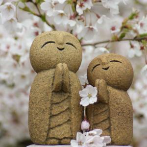 ソメイヨシノと石んこ地蔵。今満開、花びらちらちら。