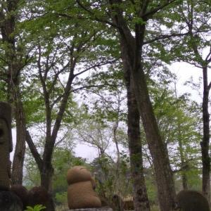 山笑う侯から新緑の候へ、今日は寒いので薪ストーブつけました。
