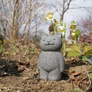 ウグイスの初鳴きは3月22日。クリスマスローズと石のくまちゃん。