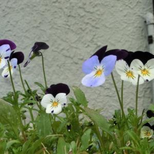 二番花。。。