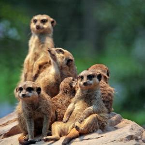 動物園に行ってきた時の画像貼る