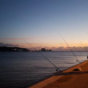 ニートワイが夜釣り来たけどお魚釣れたで