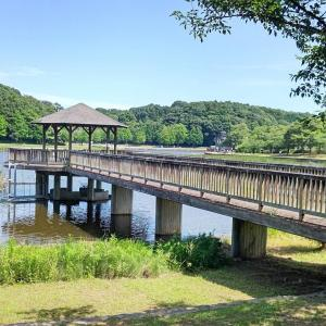 【画像】ワイがお散歩してるキレイな公園がどこか当てるスレ