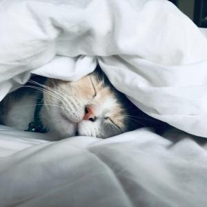 暇なやつ】ワイの猫寝てるからみてけ