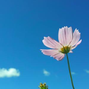 【画像】いい天気だから散歩して花の写真撮ったった