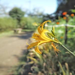 【画像】いい天気だから公園散歩。花の写真撮った。