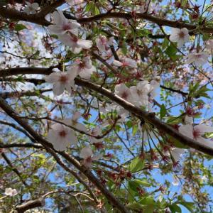 葉桜と麺類