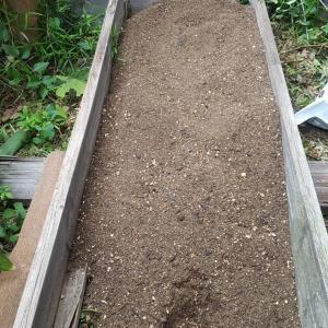 庭で家庭菜園始めました