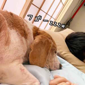 みんなでお昼寝