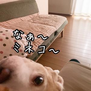 デレデレ小太郎♡