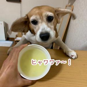 おぃおぃお〜ぃ!!