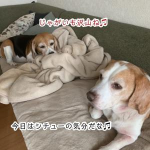 やっぱコレだね〜(о´∀`о)