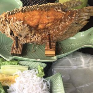 象耳魚 Elephant Ear Fish @ MEKONG TRAM DUNG (Long An)