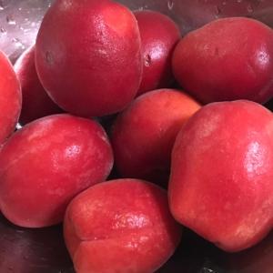 地中海産のフルーツでコンポートを作る