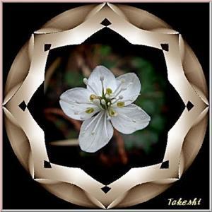 JTrim で 花の枠