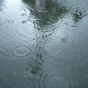 一か月以上ぶりの待望の雨