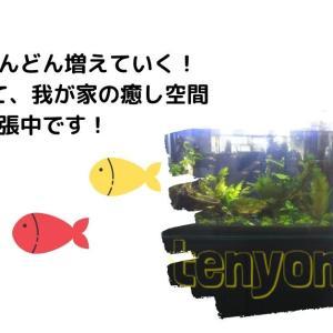 熱帯魚が増殖中|水槽は大きい方が見ていて楽しい!沼にハマる旦那さん……(笑)