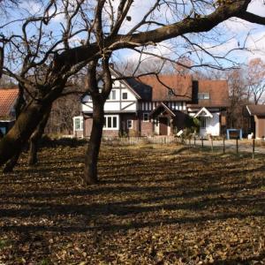 桑の葉一気に散る・冬の始まり