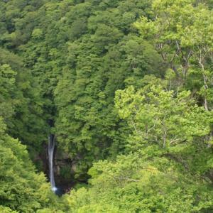 緑のパワー溢れる駒止の滝