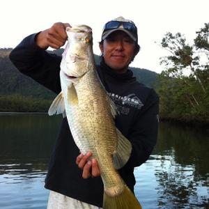 ケアンズでバラマンディ(Barramundi:オーストラリアのアカメ)を釣る