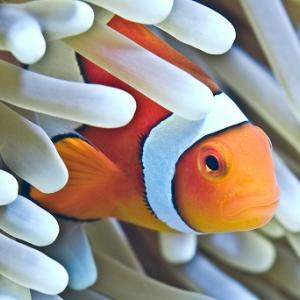 グレートバリアリーフをケアンズの水族館で楽しむおすすめの方法とは?