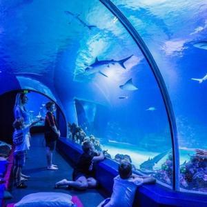 グレートバリアリーフのサメが見れるケアンズの水族館!ナポレオンフィッシュも