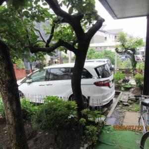 朝からの雨3日目・・・強く降ったり、シトシト降ったり・・・唯 呆れています。