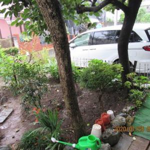 今日も雨の1日で、7月になって20日目の雨の日となった!!!!!
