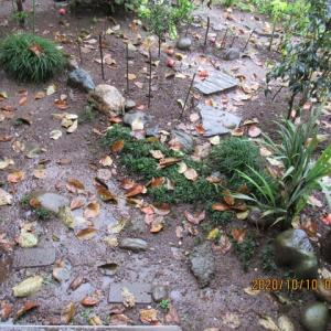 10月は秋雨だった・・・それにしても、良く降ってくれる////////。