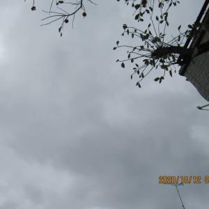 除草3時間・・・晴れて、汗が出ました。 豊田医院へ・・・。