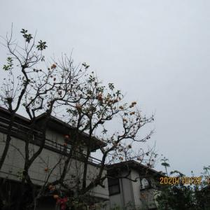 朝  小雨・・・曇天の一日であった・・・。