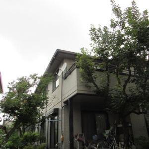 ゲリラ豪雨がありました////////// 鳥達は大変だね・・・どうして居るのだろう❓