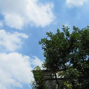 渡り鳥「ササゴイ」が、返って来ました~~~(^^♬