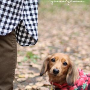 モデル犬のリリちゃん♪