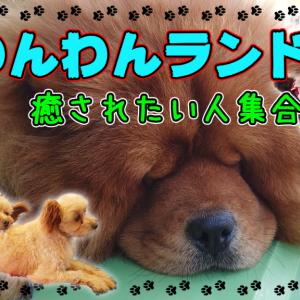 【茨城県・つくば市】癒し天国♪犬と戯れたいならわんわんランドへ行くべし!(2020/11)