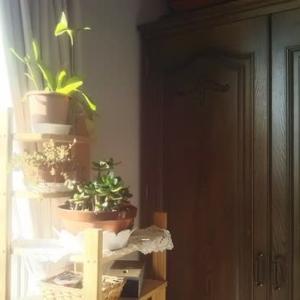 即興セッション:春立つ日に