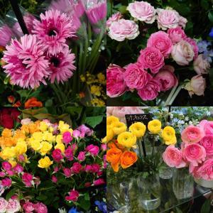 【お花の種類が増えてきました】