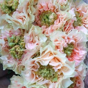 【素敵なバラ~フォセット】