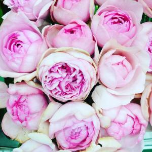 【バラがいっぱい入荷しました。】