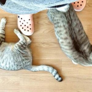 新型コロナと猫と私③我が家のウイルス対策