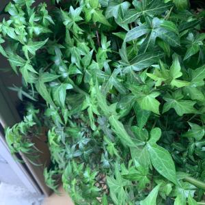 観葉植物の様子