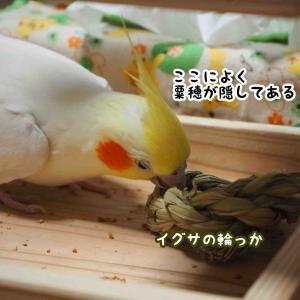 粟穂探しのユニ